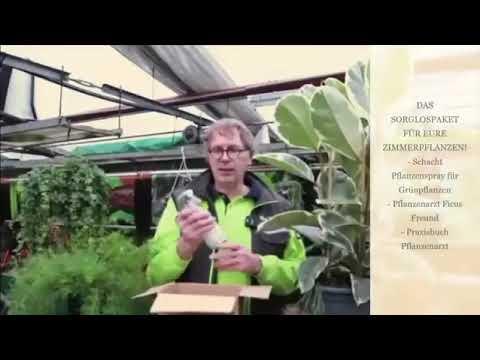 Zimmerpflanzen natürlich pflegen: Bio-Blattspray