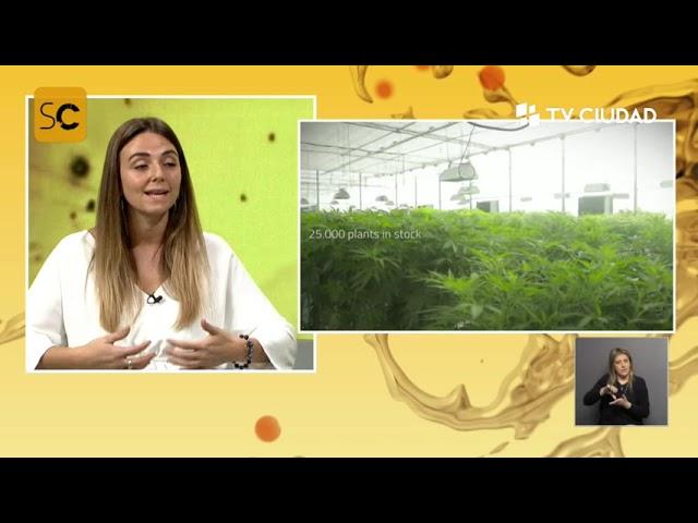 SobreCiencia - Cannabis de cáñamo: usos, medicamentos e investigación