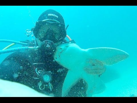 Shark Swims Up To Diver For a Cuddle Every Time She Sees Him (This has been going on for 7 years!)