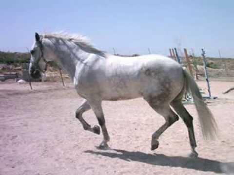 Bestes Pferd Der Welt