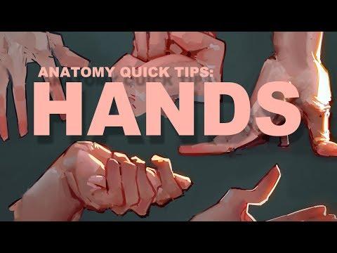 Anatomy Quick Tips: Hands