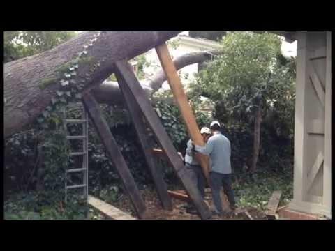Tree Job from HELL