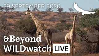 WILDwatch Live | 29 September 2020 | Morning Safari | Africa