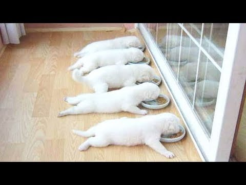 Funny Dogs Compilation  Best Funny Dog Videos Ever