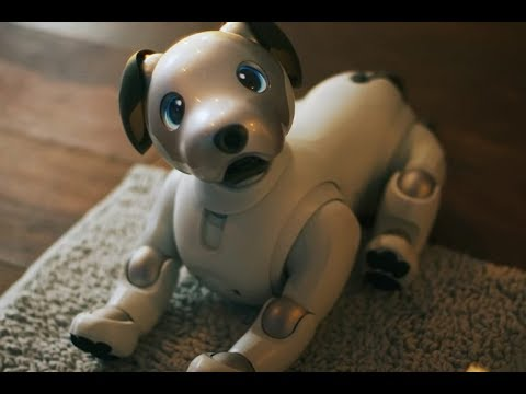 Sony AIBO Robot Dog 2017 First look