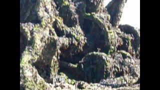 SS Vina Shipwreck - Brancaster beach