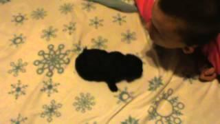 Puppy Potty Training Gone Awry