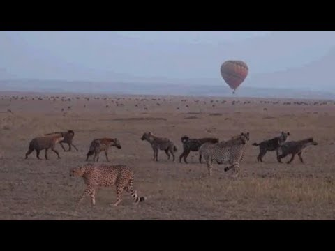 Safari Live's Sunrise Safari Drive at 6:00 AM on July 22, 2017 ( TV Special )