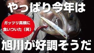 再度旭川バチパターン調査に行ってみた!