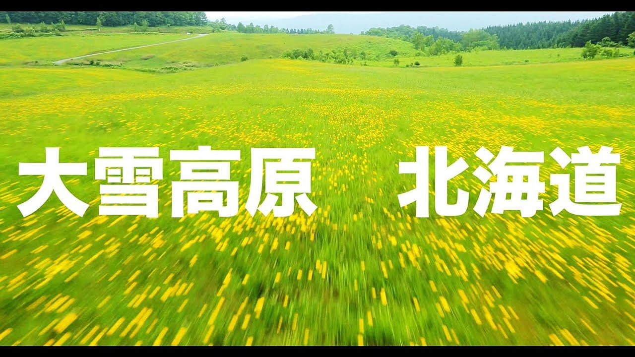 【空の旅#76】「草原の花。なんと気持ちのいい丘なんだ」空撮・多胡光純 北海道_Hokkaido aerial