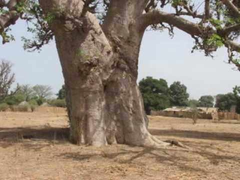 inside africa photos de terrains nianing senegal vendre youtube
