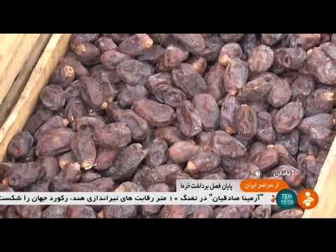Iran The end of Date harvest season, Abadan county پايان فصل برداشت خرما شهرستان آبادان ايران
