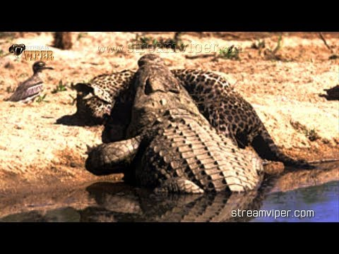 The Deadliest Animals In The World:  Crocodiles - NatGeo Wild - National geographic channel