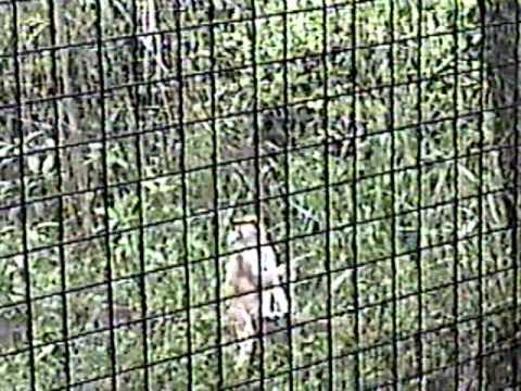 Costa Rica Zoo 2