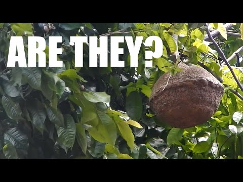 """These """"Brazil Nuts"""" Aren't Looking Right!"""