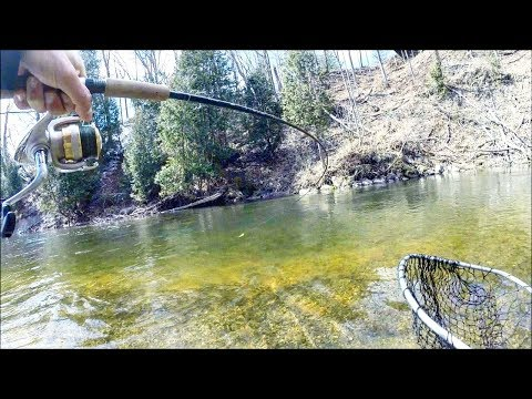 When AMATEURS Go Steelhead Fishing