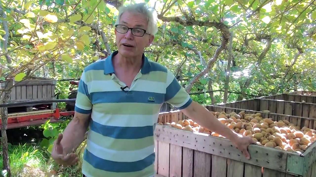 Rencontre avec Dominique Streit, producteur de kiwis bio à Allaman (VD)
