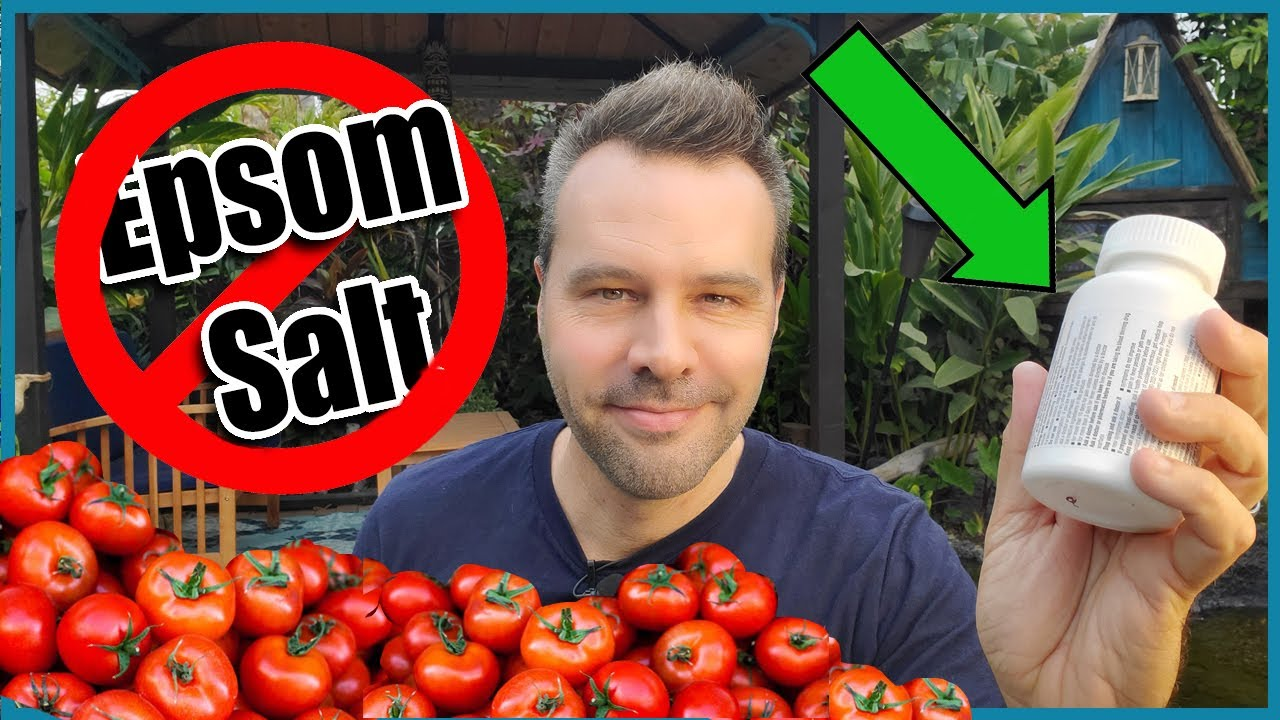 Download TRANSFORM Your TOMATOES With THIS Household Ingredient!