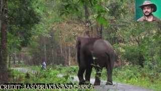 elephant so close