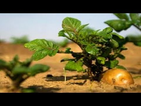 China: intends to grow potatoes and raise worms on the moon.