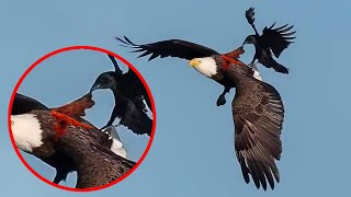 14 Most Fearless Birds in the World