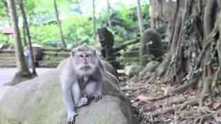 Ubud Monkey Forest Sanctuary Dance Bali, Indonesia - ooAsia ooaworld