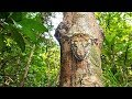 From rodents crawling through the woods, to cats sleeping in trees, here are Hidden Animals in plain sight. Subscribe to American Eye http://goo.gl/GBphkv 7. Clouded Leopard This rare,...