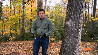 How To Select The Correct Tree For Firewood