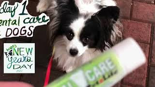 How to brush and clean my dog's teeth at home  trying Petzlife gel