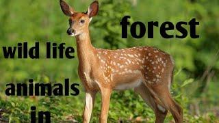 Amazing video wild animals life style,Best knowledge of kids.