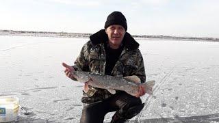 Зимняя рыбалка Открытие зимнего сезона 2019 2020