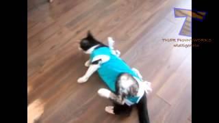 Кошки чудят после посещения ветеринара