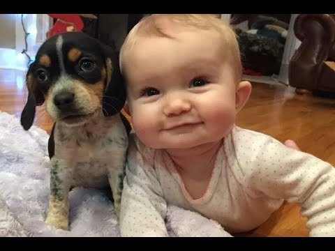Baby and Beagle dog have funny time – Dogs and Babies are really cute and make us happy