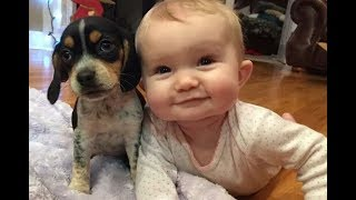 Baby and Beagle dog have funny time - Dogs and Babies are really cute and make us happy