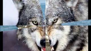 Волчонок......