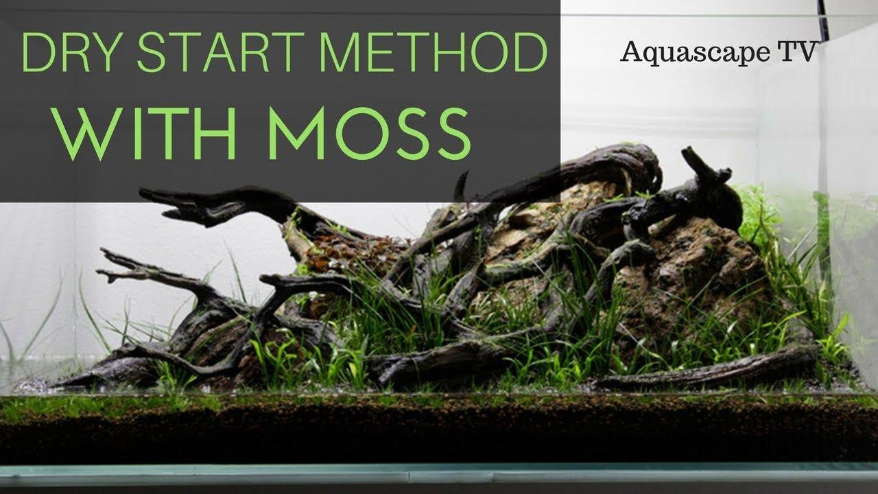 dry start method aquarium with moss aquascape tv youtube
