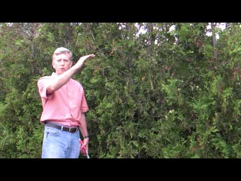 How To Prune a Hedge