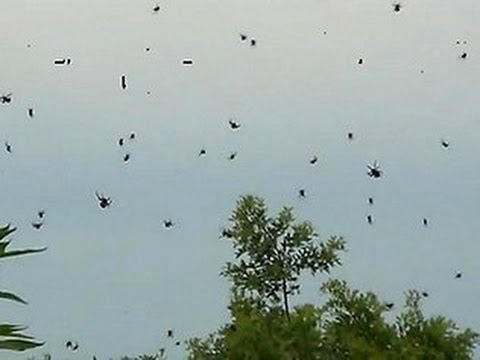 Jake Dill - Thousands of Spiders Create Web in the Sky