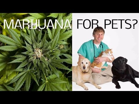 Medical Marijuana For Pets?
