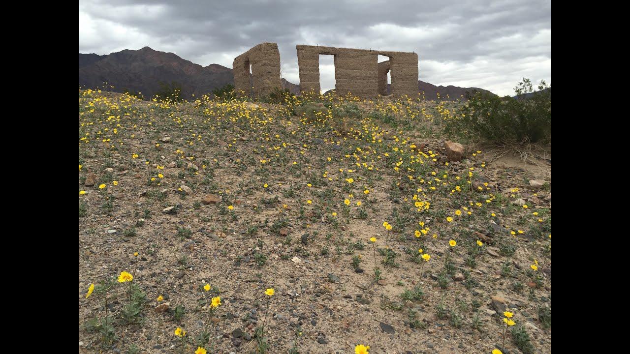 Death Valley Wildflower Bloom 2016 Youtube