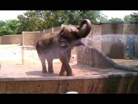 Intelligent Elephant Asks For A Drink.