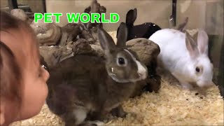 Cute animals, cute PUPPIES, KITTENS and BUNNIES at Pet World Store