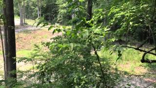 30 acres of Land For Sale in Gates County, NC: Back Field Ladder Stand