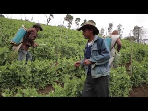 Lifting people out of poverty in Guatemala