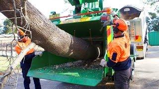 Amazing Automatic Fast Big Wood Chipper Machines Modern Technology, Best Large Tree Shredder Machine