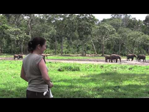 Dzanga Bai Elephants   Central African Republic