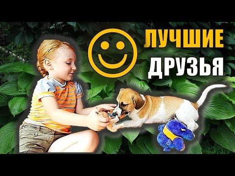 Собака и ребенок видео ЩЕНОК ИГРАЕТ Детское видео про ...