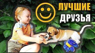 Собака и ребенок видео ЩЕНОК ИГРАЕТ Детское видео про собаку