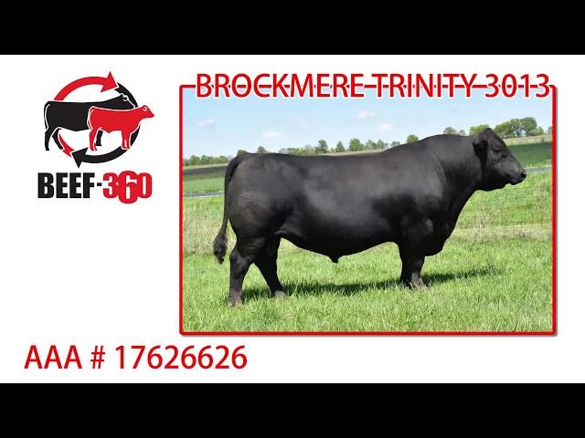 Beef 360 - BROCKMERE TRINITY 3013