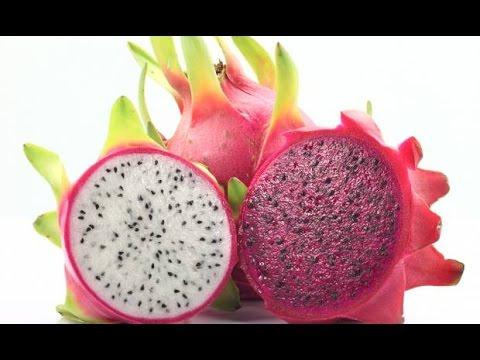 """La pitaya """"fruit du dragon"""" : culture, plantation, entretien, taille et récolte"""